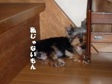 コピー ~ 2008_09.22