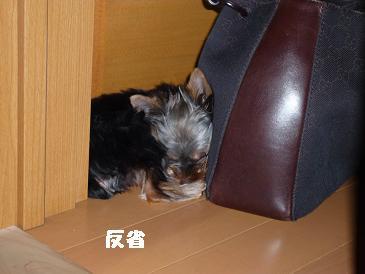 コピー ~ 2008_0922-2