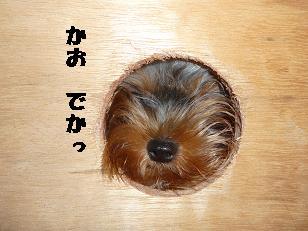 コピー ~ 2008_10119・16デジカメ0020
