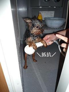コピー ~ 2009_0305 デジカメ写真0013