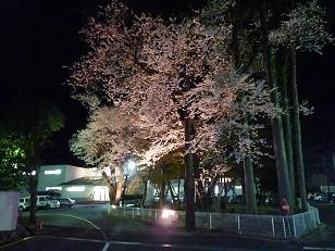 2009_0326 夜桜2