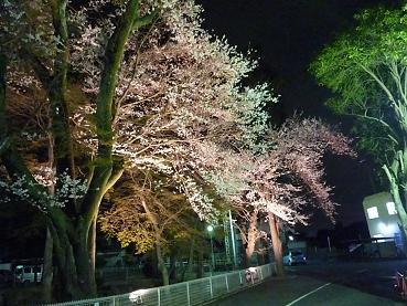 2009_0326 夜桜