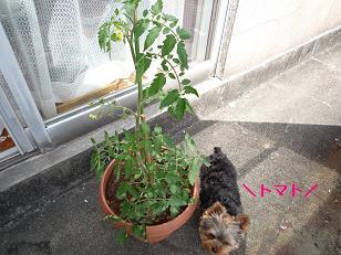2009_0511 デジカメ写真0015