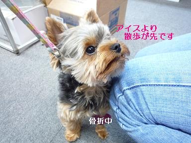 2009_0506 デジカメ写真0034