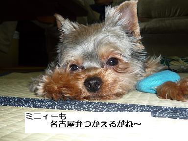 2009.6.2 名古屋弁
