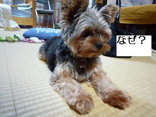 2009_0814 デジカメ写真20050