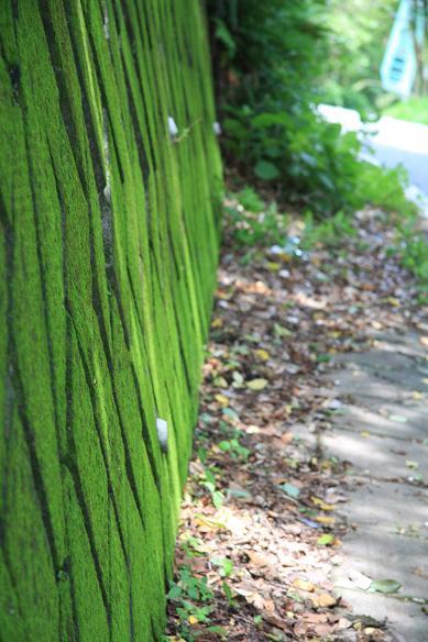 緑の壁 012