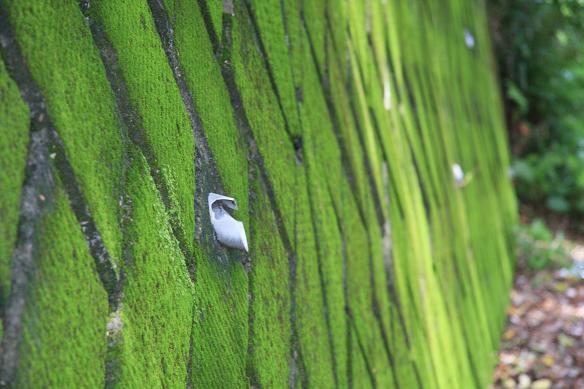 緑の壁 008