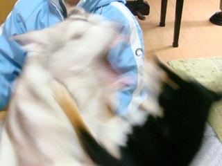 2008_05_21_02.jpg