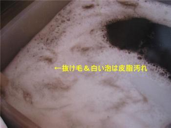 CAT0A81Z_convert_20090613081527.jpg