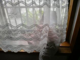 れーちゃん窓2