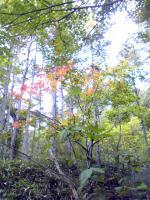 皇海山の紅葉具合