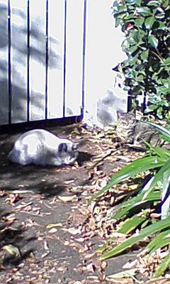 散歩で見つけた猫くん♪