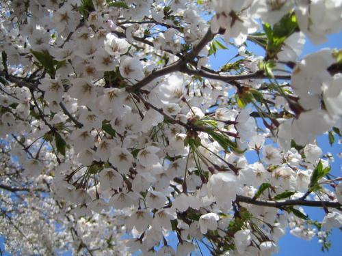 花もちしてマス#10048;