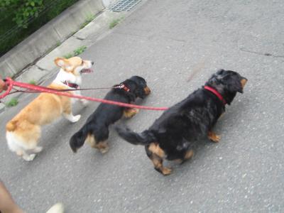 散歩だじょーーー☆