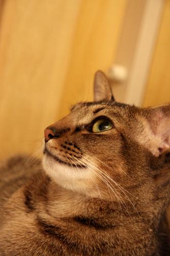 ネオが我が家に来て1年経った日
