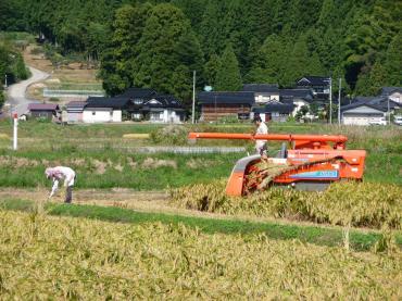'08 稲刈り1