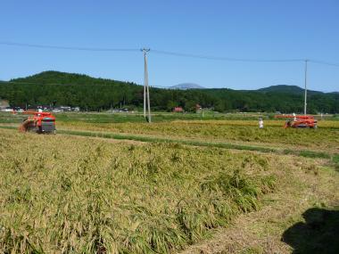'08 稲刈り2