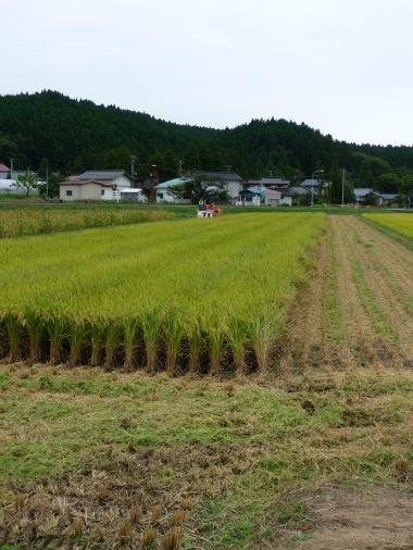 '08 稲刈り5