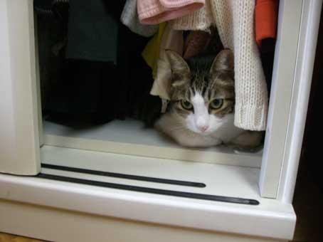 猫秘密基地