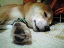 danny_kyukei3_20090718162319.jpg