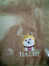 hachi_closeup.jpg