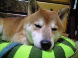 kaminari_kirai3.jpg
