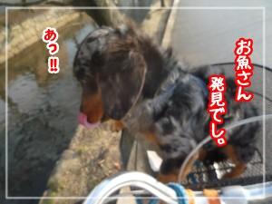 画像 003a