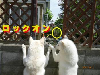 2ワン覗き見 2