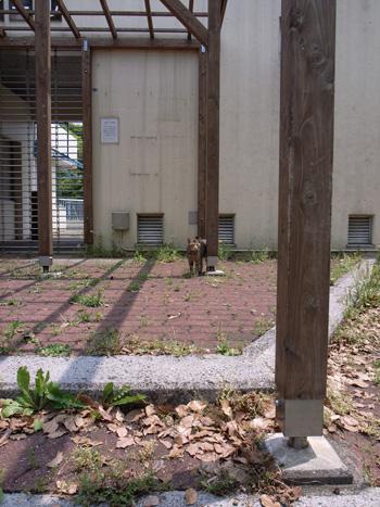 猫1 2008年5月22日