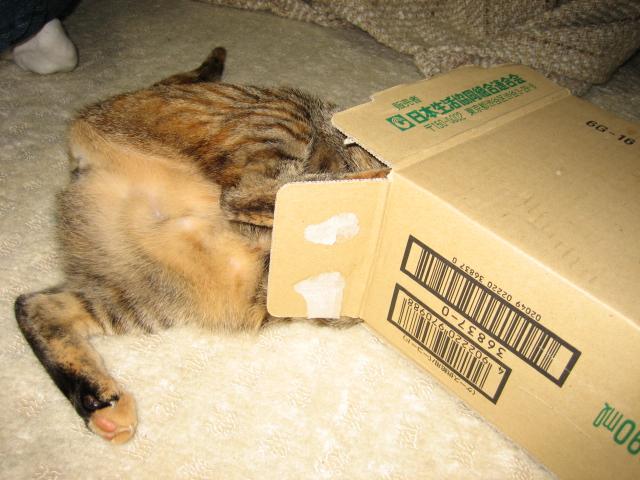 小箱とこデブ猫