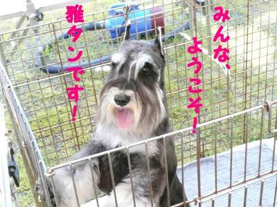 岡山ドッグショー雅1-s