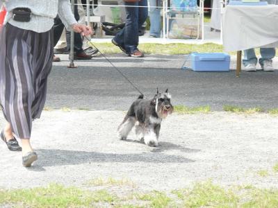 岡山ドッグショー雅ラン1-s