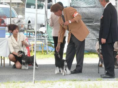 岡山ドッグショー瓜生さんラン1-s