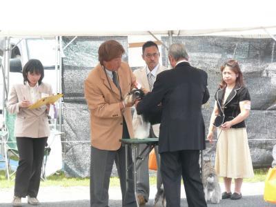 岡山ドッグショー瓜生さん触診2-s