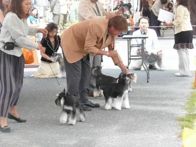 岡山ドッグショー開始-s