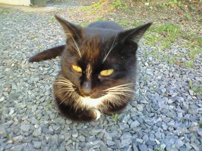 ねこって名前の猫