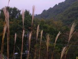 08-11-8藤野15