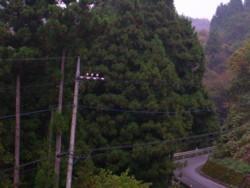 08-11-8藤野16