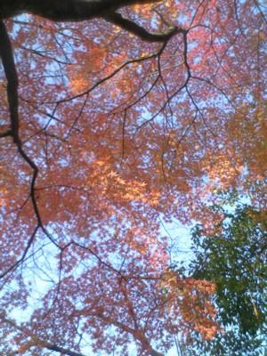最後の秋2