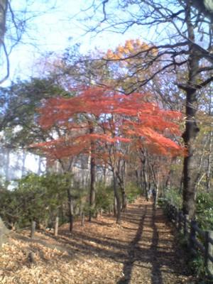 最後の秋3