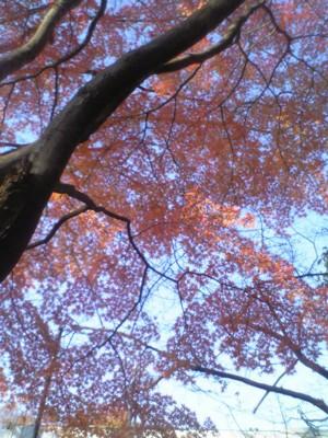 最後の秋4