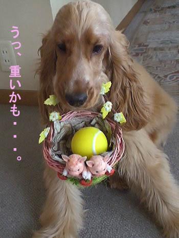 baseballdog2.jpg