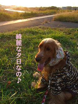 秋の夕焼けっていいね~