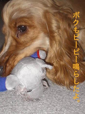 comecomedog2.jpg