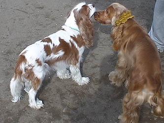 enjoythedogpark2.jpg