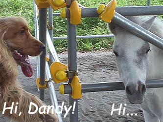 enjoythedogpark5.jpg