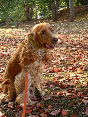 fallen-leaves3.jpg