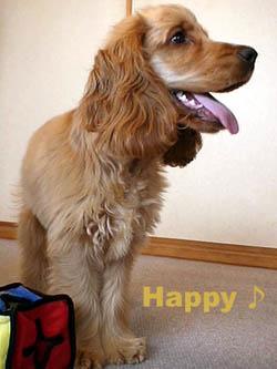happysmile1.jpg