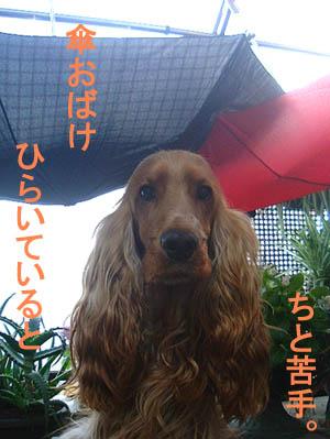傘キライなの